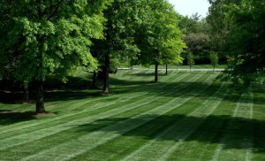 Saint Louis landscaping - Loyet Landscape Maintenance